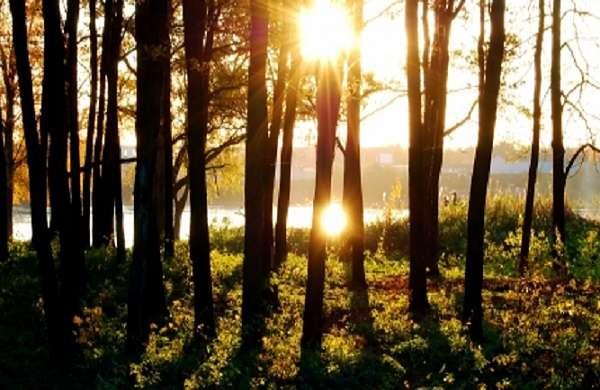 APIA Dambovita: Sprijin pentru prima împădurire şi crearea de suprafețe împădurite