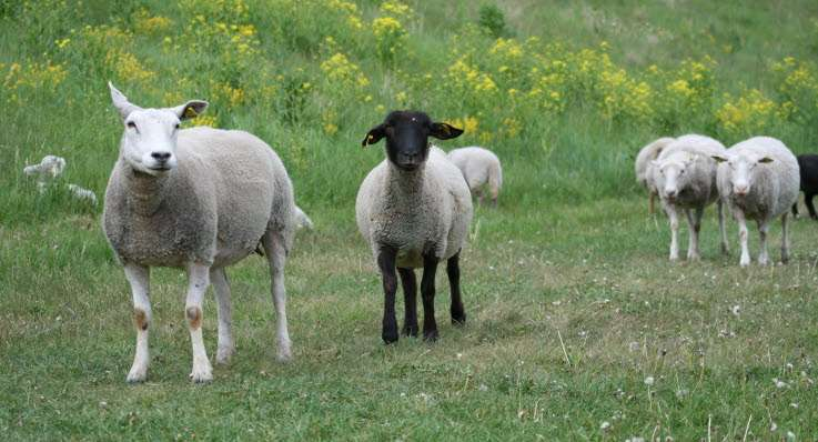 Q&A! Pot să mă deplasez într-o altă localitate pentru a asigura hrană unor animale pe care le am în grijă?