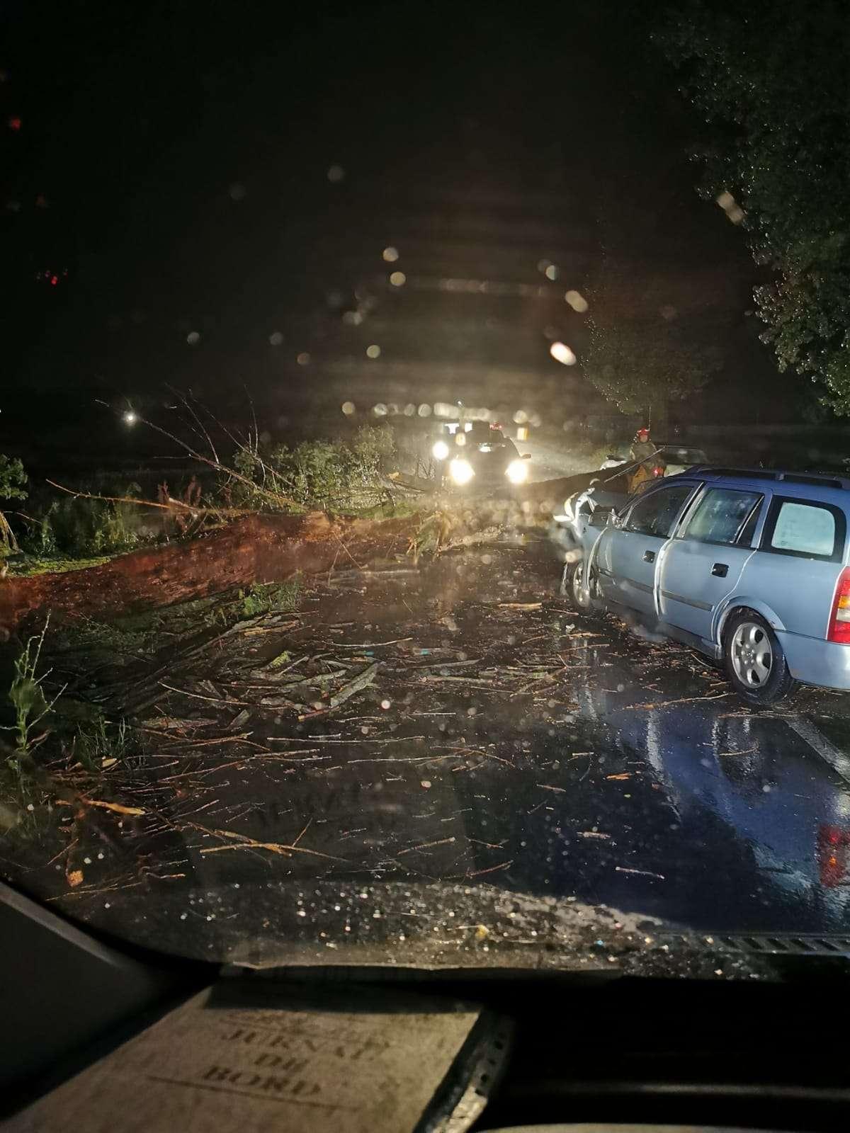 GIURGIU Un copac rupt de vijelie a produs un accident pe Drumul Județean 601